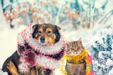 Dog and cat with Christmas tinsel sitting together outdoor in a snowy forest near fir tree. Christmas scene Stock Photo