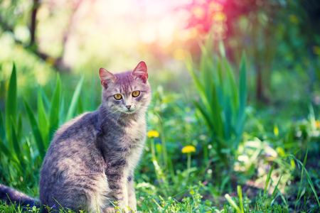 Portrait of a cat sitting in a grass in a garden in summer Stock Photo