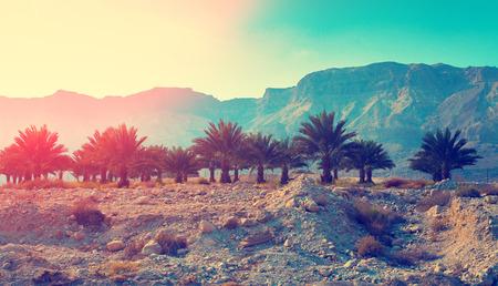 Judean desert in Israel at sunset. Stock Photo