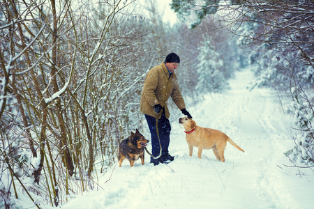 A man with two dogs walks in the woods in winter Stock Photo