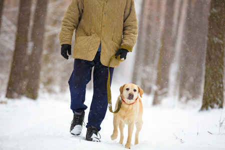 Man with dog on a leash walks in snowy forest in winter Stock Photo