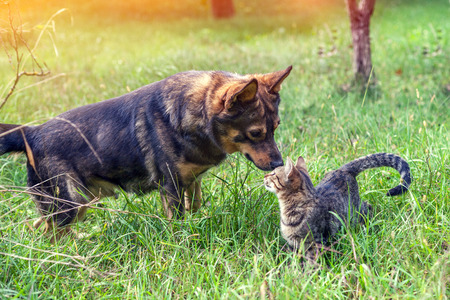 Dog and cat - best friends, walk in the grass in the garden in autumn