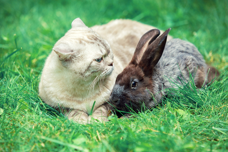 White cat and brown rabbit sitting together on green grass in spring. Easter concept Stock Photo