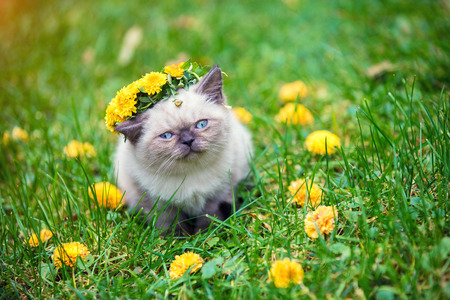 Little kitten, crowned with flower wreath, outdoor in the garden