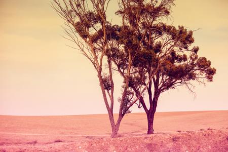 trees in the desert in the evening Archivio Fotografico
