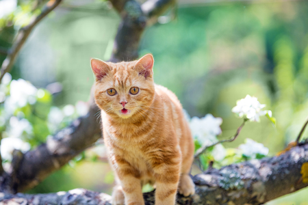 Cute cat is on a branch of a tree in a garden in spring