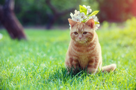 Portrait of a little red kitten with cherry flowers on the head. Cat sitting in the garden on the grass