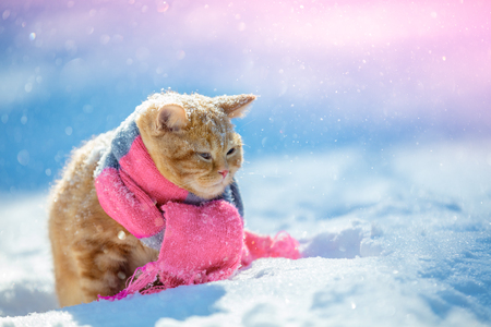 Portrait of a little red kitten wearing knitted scarf outdoors in winter