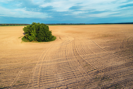Aerial view of the arable field in spring. Trees in the middle of a plowed field Stock Photo