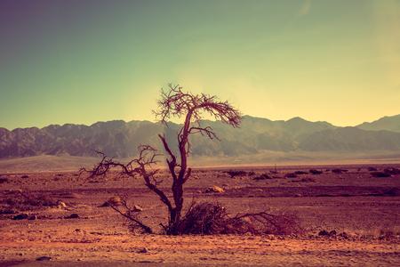 Mountain desert landscape. Desert Arava, Israel