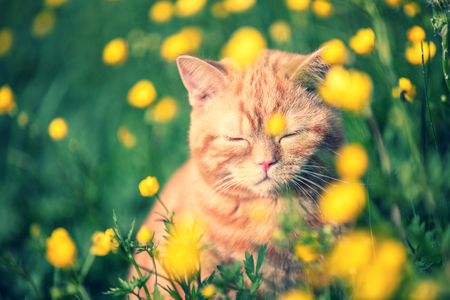 Red tabby cat enjoying the sun on the flower lawn Stock Photo