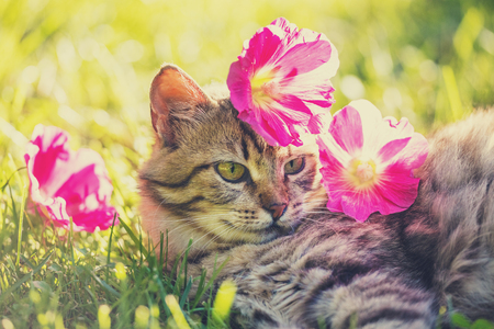 Cat lying on the grass in the garden in summer with flowers on the head