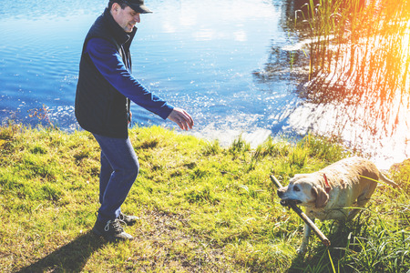A man with Labrador retriever dog walks on a lakeshore in autumn. The dog took a stick out of the lake and brought it to the owner