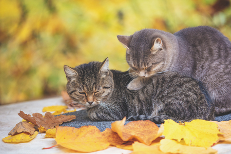 Two sleeping cats. Cats lying in an orchard in autumn