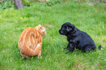 Funny animals. Little puppy and kitten playing  on the grass in the summer garden