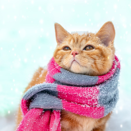 Little red kitten wearing knitted scarf sits on the snow in winter Stockfoto