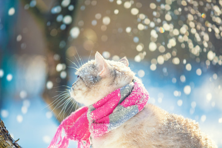 Cat wearing a knitted scarf outdoors in a winter garden