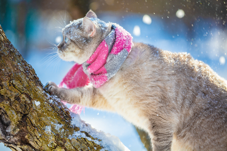 Cat wearing a knitted scarf outdoors on a tree in a winter garden Stock Photo