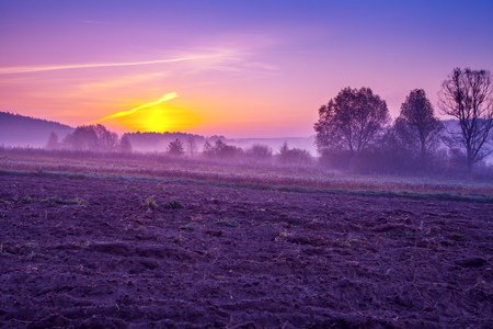 An arable field in the early morning in trendy purple color