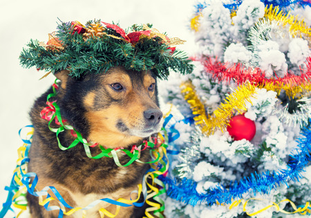 Portrait of a dog entangled in colorful tinsel and crowned Christmas wreath. Dog walking in the snow outdoor