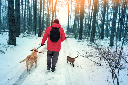 A man with two dogs and a cat walks in a snowy pine forest in winter Фото со стока
