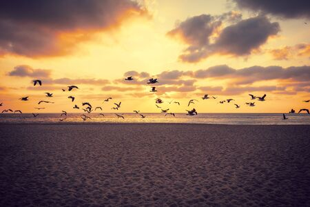 Sunset over the sea. Seagulls flying over the beach. Atlantic ocean in the evening. Porto, Portugal, Europe Фото со стока