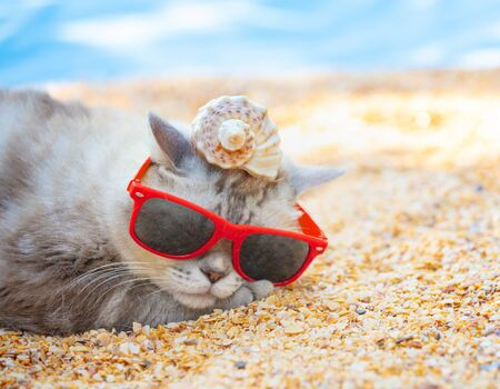Cat wearing sunglasses with the shell on a head lying on the beach Фото со стока