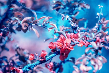 Vintage blooming garden. A branch of a flowering peach tree Фото со стока