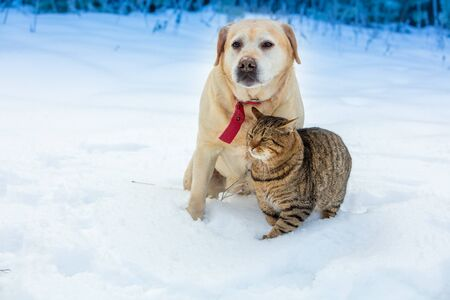 Cat and dog - best friends play together in the snow