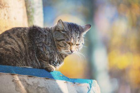 Cat lying in the yard in autumn