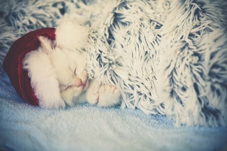 Cute little kitten wearing Santa hat sleeping covered with a fluffy blanket Stock Photo