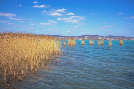 The shore of Lake Balaton on the Tihany peninsula. Hungary, Europe Zdjęcie Seryjne