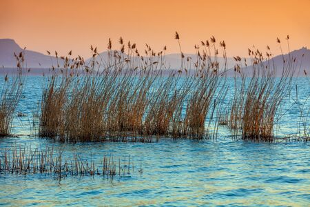 The shore of Lake Balaton on the Tihany peninsula. Hungary, Europe