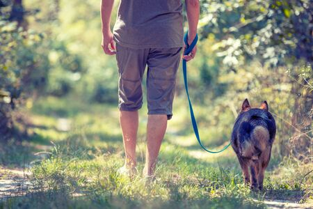 A man walks with a dog in the woods in summer. Man holding a dog on a leash