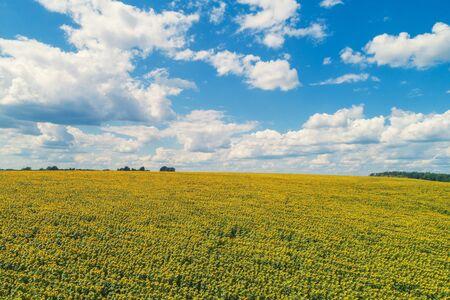 Paysage d'été avec tournesols et beau ciel. Champ de tournesol pittoresque, vue aérienne. Paysage rural. Fond de nature