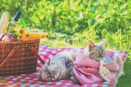 Two cats lying on a blanket near a picnic basket on a sunny summer day. One of the cats lies in a bag