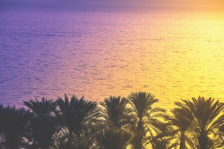 Beautiful Sea of Galilee in the early morning. Sea landscape in Northern Israel. Palm trees near the sea. The time before sunrise. Israel