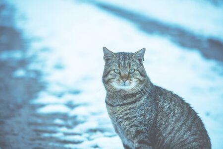 Cute tabby cat sits on a snowy field in winter