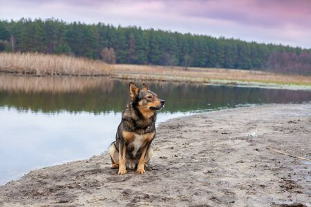 Portrait of a dog outdoors. Wolfdog sitting on the riverbank in autumn