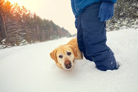 A man with a dog Labrador Retriever stands in deep snow on a clearing in a snowy winter forest Zdjęcie Seryjne