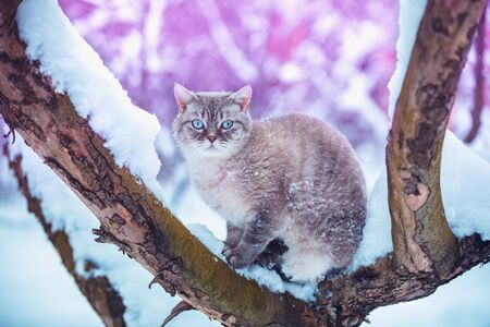 The cat sits on a tree in the winter orchard. Portrait of a siamese cat outdoors in winter