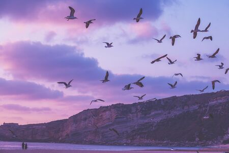 Sunset over the sea. Seagulls flying on the beach. Atlantic ocean in evening, Nazare, Portugal, Europe