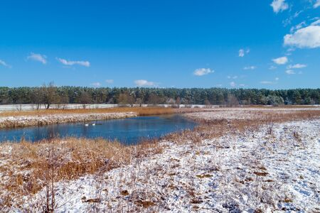 A pair of swans swimming in a frozen lake in early spring Banque d'images