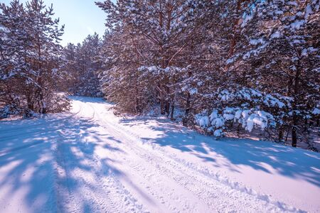 Nature winter background.  Snowy forest.  Trees covered with snow. Winter nature. Christmas background. Banque d'images
