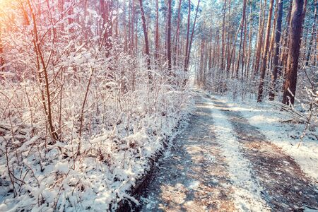 Nature winter background. Dirt road in a snowy forest in early spring