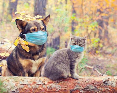 Dog and cat in medical face mask (respirator) outdoors. Medical concept