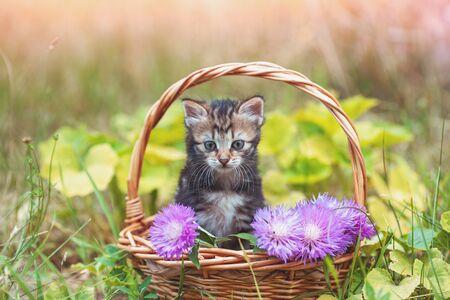 Little kitten sitting in the garden in the basket with flowers