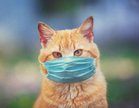 Portrait of a ginger cat. The cat in the medical face mask (respirator) outdoors. Medical concept
