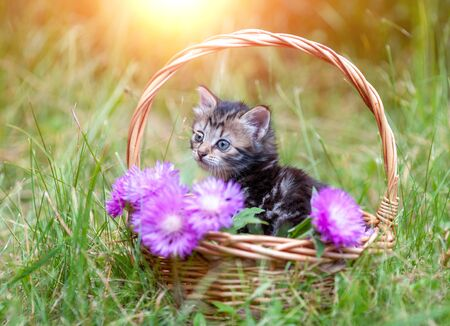 Little kitten sitting in the garden in the basket with flowers