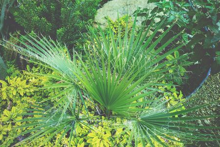Green exotic plants. Tropical nature background
